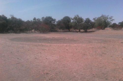 Article : Champ au Sahel : sueurs et lueurs du paysan